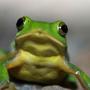 快語小青蛙
