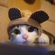 創作者 可愛的貓貓 的頭像