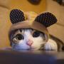可愛的貓貓