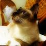cathy2cat