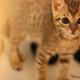 創作者 catkatcats 的頭像