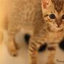 catkatcats
