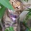 catssky