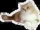創作者 金粉貓 的頭像