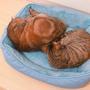 1kid2cats