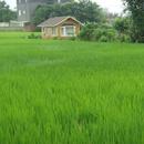 綠地表 圖像
