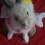 兔兔小姐‧玩樂賞