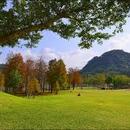 紓困貸款評分表 圖像