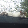 愛貓2266