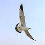 飛鳥FiFi