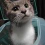 lovepetcat