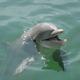 創作者 海豚play 的頭像