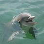 海豚愛分享