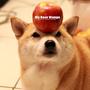 愛吃吃 Mango
