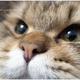 創作者 Mia喵喵 的頭像