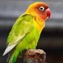 parrot83