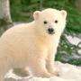 PolarBear97