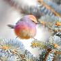 Birdy.Huang