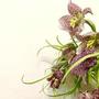 shiun flower-js