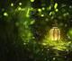 創作者 螢火蟲親子芳療館 的頭像