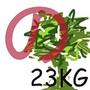 tree23kg
