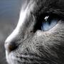 天蠍座的貓