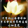 wang110466